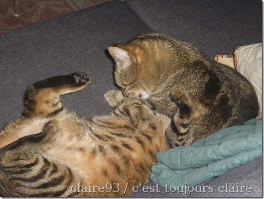 2304 cats1